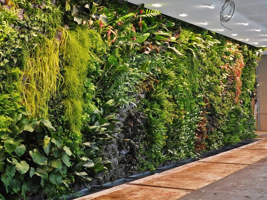 Créer un mur végétal avec Verthème
