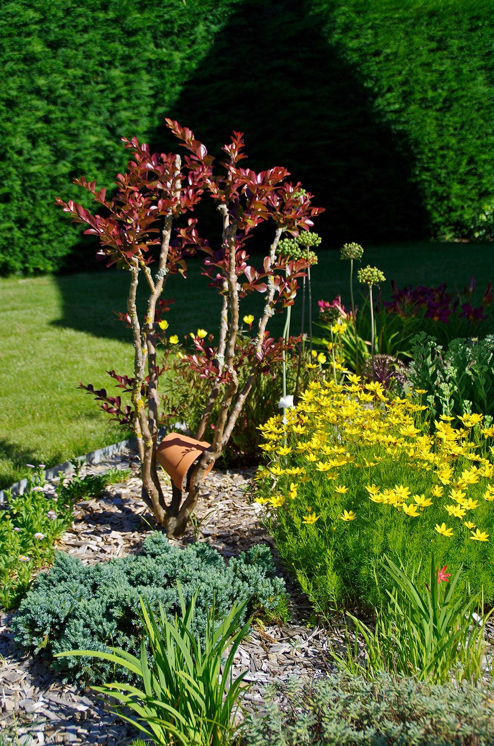 Aménagement végétal : bosquet végétal
